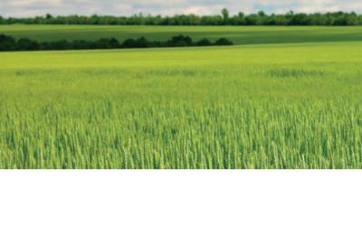 Abeceda ozimé pšenice